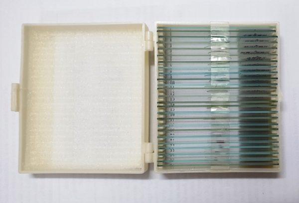 Bộ 25 mẫu tiêu bản cho kính hiển vi